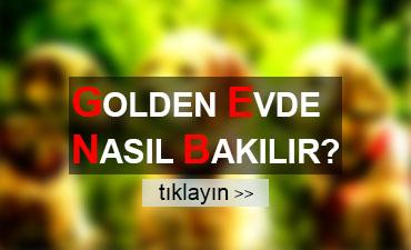 golden-apartman-ev-yasar-mi