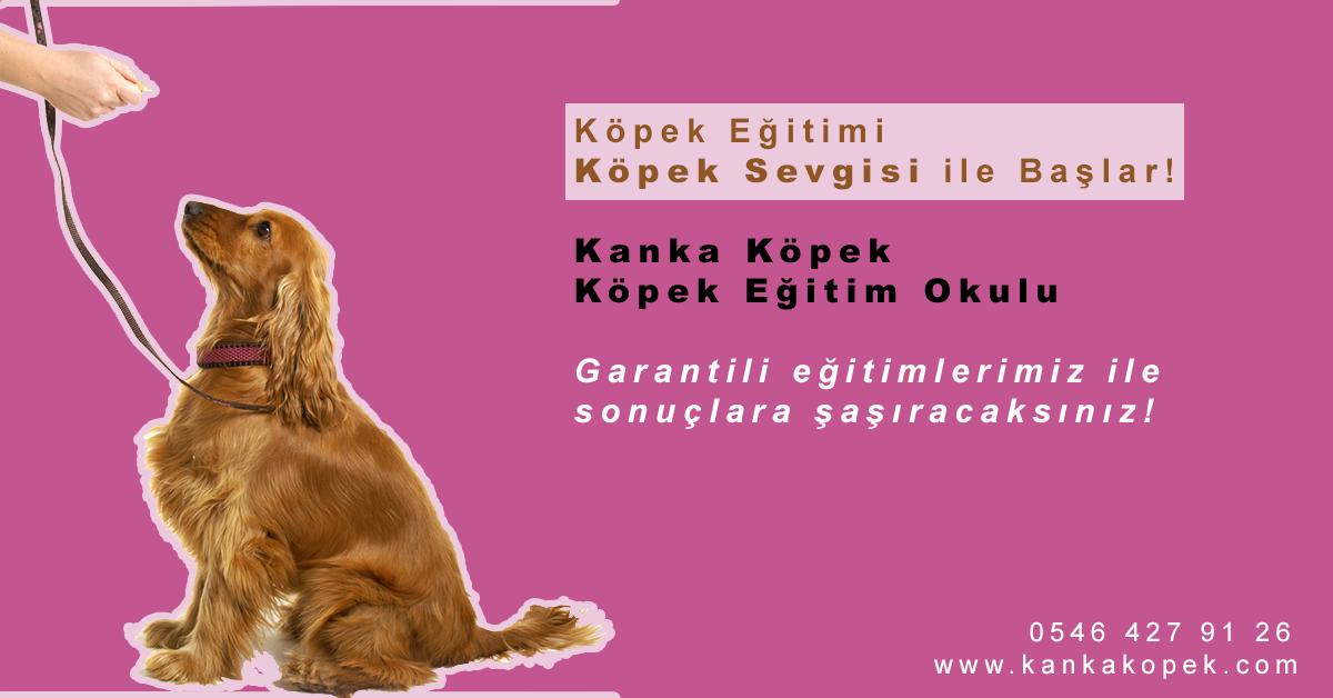köpek eğitim merkezi köpek eğitim okulu