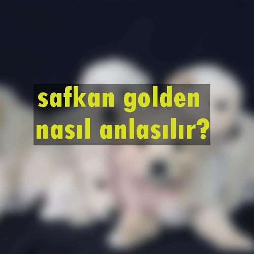 safkan golden anlama
