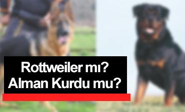 rottweiler mı alman kurdu mu?