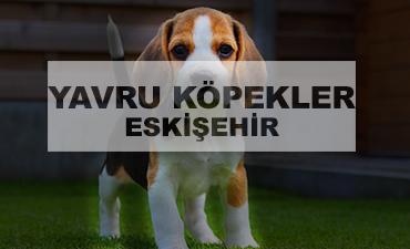 satılık köpekler eskişehir