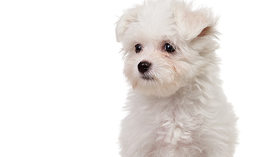satılık yavru köpekler izmir 6